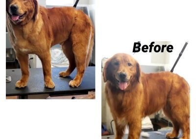 Before and After Yachting Cut